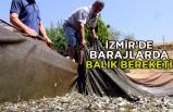 İzmir'de barajlarda balık bereketi