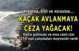 Denizlerde kaçak avcılığa ceza yağacak!