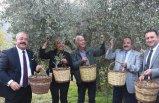 Selçuk'ta zeytin hasadı