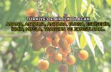 Türkiye'de bir ilk olacak: En temiz ağaç!