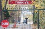 Yunanistan'ın kabul etmediği IŞİD'linin tampon bölgede bekleyişi sürüyor