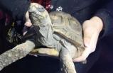 Akıllara durgunluk veren olay: Yalnız bıraktıkları kaplumbağa...