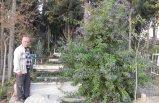 Köy mezarlığını çiçek bahçesine çevirdi
