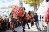 Efes Deve Güreşleri öncesi en süslü deve seçildi