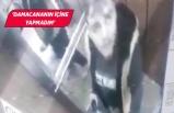 İzmir Buca'da su damacasına idrarını yapan şahıs yakalandı!