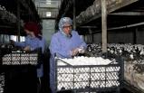 Türkiye'nin mantar merkezinde fiyat rahatsızlığı