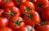 AKİB: Rusya, domates kotasını tamamen kaldırmalı