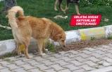 Urla Belediyesi sokak hayvanlarını unutmadı