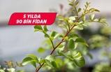 İzmir'de son 5 yılda 90 bin sakız ağacı fidanı üretildi