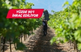 Sofralık üzüm ihracatında hedef 180 milyon dolar