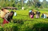 Nijerya yılda 5 milyar dolarlık gıda ithal ediyor