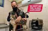 Depremzede kediyi Haluk Levent sahiplendi