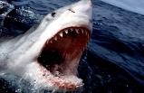 Saint Martin'de bir turist köpek balığı saldırısıyla öldü
