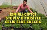 İzmirli çiftçi 'stevia' bitkisiyle gelir elde edecek