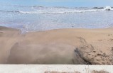 Deniz salyası Karadeniz'e ulaştı!