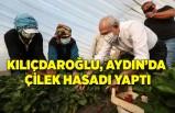 Kılıçdaroğlu, Aydın'da çilek hasadı yaptı
