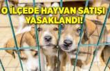 O ilçede hayvan satışı yasaklandı!