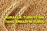 Kuraklık 'Türkiye'nin tahıl ambarı'nı vurdu