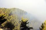 Mersin'deki orman yangını 3'üncü günde