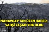 Manavgat'tan üzen haber: Vahşi yaşam yok oldu
