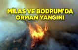 Milas ve Bodrum'da orman yangını