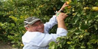 Ali Er, Limon Yetiştiriyor