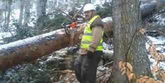 Kestiği Ağacı Çekerken Traktörle Uçuruma Yuvarlandı