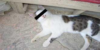 Yok Artık! Kediye Tecavüz Ettiler!