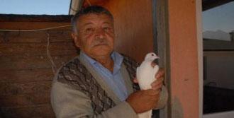 Güvercin Sevgisi,Başını Derde Soktu