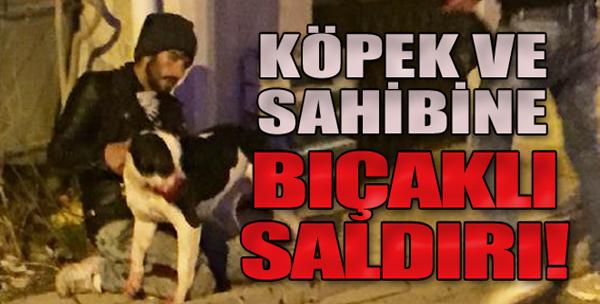 Köpek ve Sahibi Yaralandı