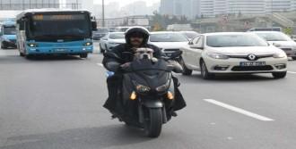 'Zıpkın' Köpeğin Motosiklet Tutkusu