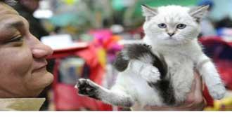 Şişman Kedi Yarışması