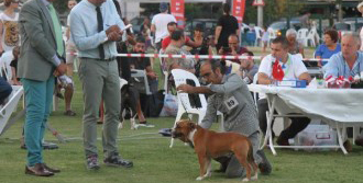 Gaziemir'de Köpekler Yarıştı