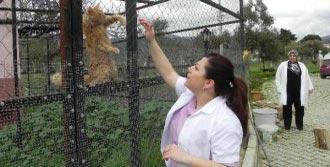 Kedi 'Fıstık'ın Çabası
