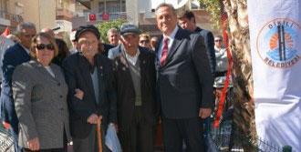 Cumhuriyet Çınarı Dikili'de Ölümsüzleşti