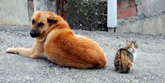 Kedi İle Köpek Birlikte Güneşlendi