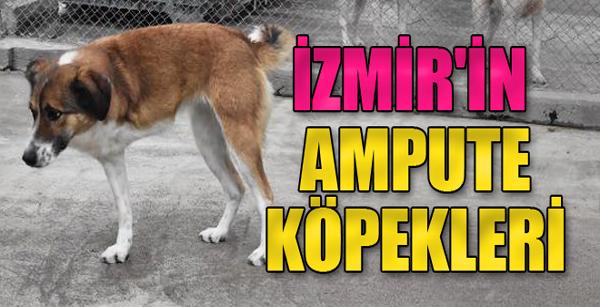 İzmir'in Ampute Köpekleri