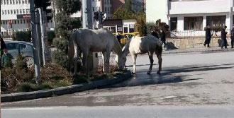 Niğde Kent Merkezinde Atlar Dolaştı