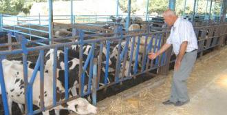 Bayındırlı Süt Üreticisinden, Rekabet Çağrısı