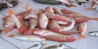 Bu Balık Altın Kadar Kıymetli