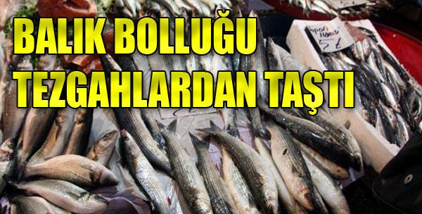 Balık Bolluğu Tezgahlarda