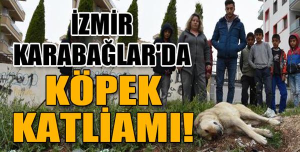 Karabağlar'da Köpek Katliamı