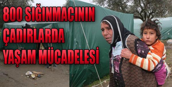 800 Sığınmacının Çadırlarda Yaşam Mücadelesi