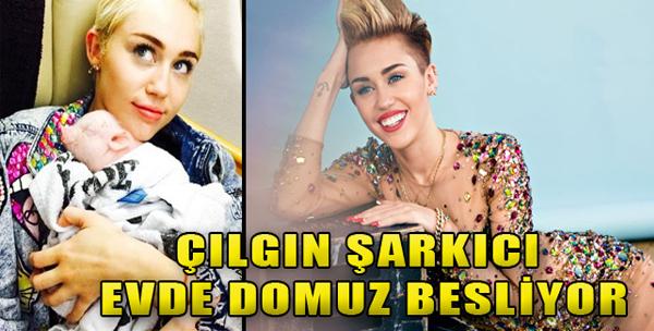 Miley'in Minik Domuzu