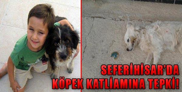 Köpek Katliamına Afişli Tepki