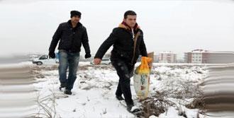 Bolu'da Sokak Hayvanlarına Yiyecek Bırakıldı