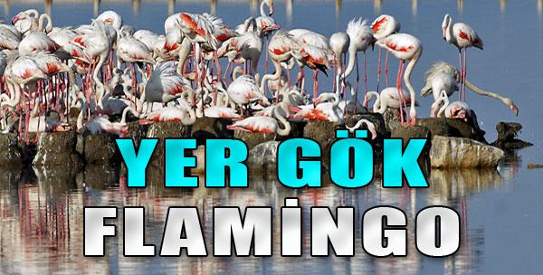 Binlerce Flamingo Kuluçkaya Yattı