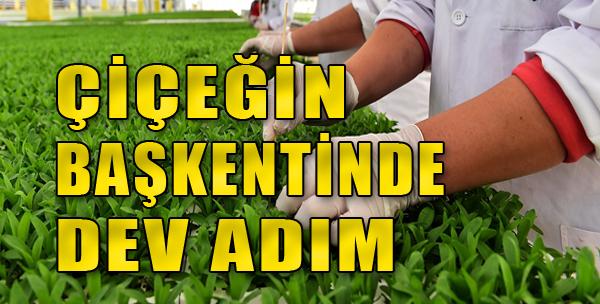 Hollanda Adına Çiçek Tohumu Üretimi Başladı
