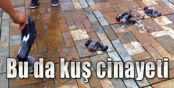 Konak Meydanı'ndaki Kuşları Ezdi