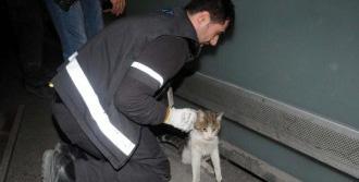 Havalimanı'nda Kedi Operasyonu